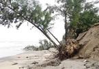 Underwater dyke set to save Cua Dai beach from erosion