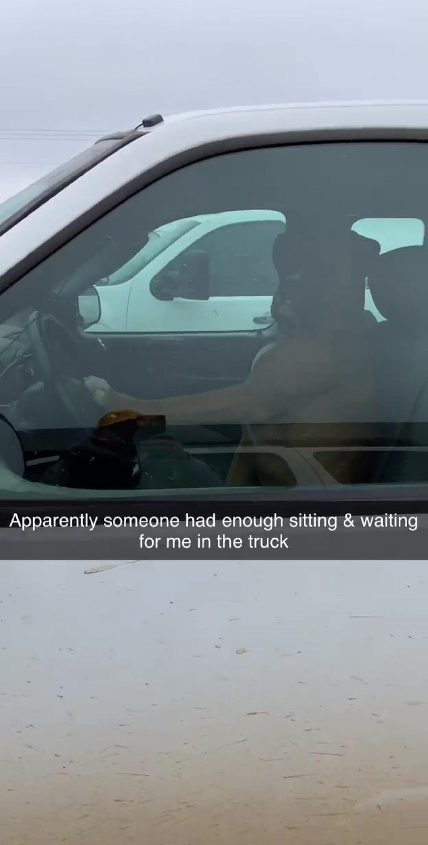 Chú chó bấm còi inh ỏi gọi chủ nhân quay trở lại xe