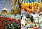 Golden opportunity for VN farm produce to regain home market