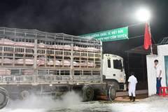 Giá thịt lợn cao chưa từng có, ồ ạt nhập lợn nái về Việt Nam