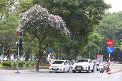 Summer flowers in Hanoi