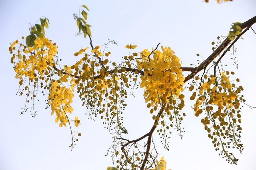 Summer flowers in Hanoi,lotus,west lake,Vietnam in photos
