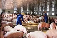 Thịt lợn đắt đỏ chưa từng có, tăng giá thách thức mọi 'lệnh' ép giảm
