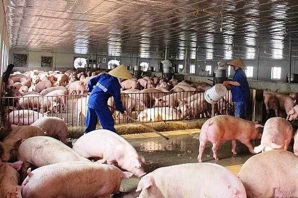 Thịt lợn đắt đỏ, doanh nghiệp lãi lớn chưa từng có
