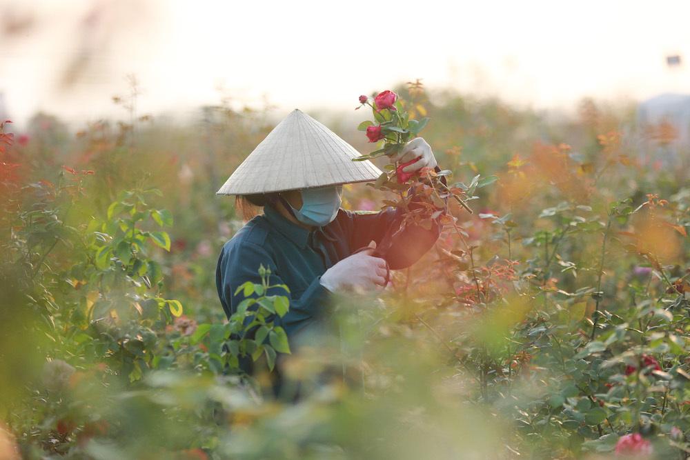 Me Linh flower market,hanoi flower market,Vietnam in photos