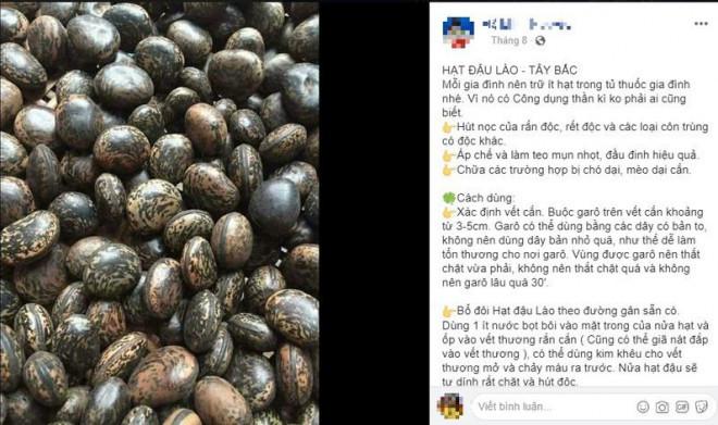 Sự thật về hạt đậu Lào có giá 'cắt cổ' vẫn được nhiều người lùng mua