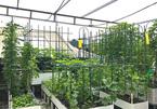 Khu vườn xanh mướt trên sân thượng của mẹ đảm Hà thành