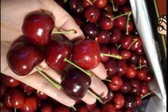 Tăng giá gấp 4, loại quả Mỹ vẫn đắt khách giàu Việt Nam