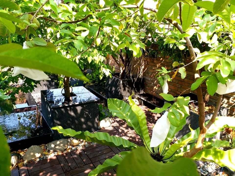 Ông chủ quán phở trồng cây ăn trái trên sân thượng, người Sài Gòn thích mê