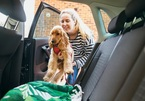 Lái xe cùng thú cưng giúp tài xế bớt căng thẳng hơn