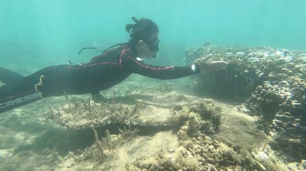 Coral reefs restoration begins in Son Tra Peninsula