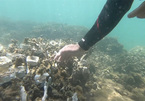 Coral reefs restoration begins in Son Tra Peninsula
