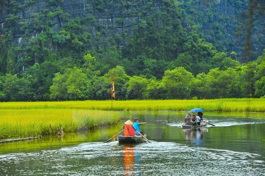 Tam Coc – Bich Dong blanketed with ripen paddy fields