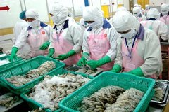 Shrimp exporters see bright future despite Covid-19