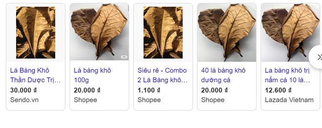 Chuyện thật như đùa, lá bàng khô rao bán rầm rộ 1.000 đồng/lá