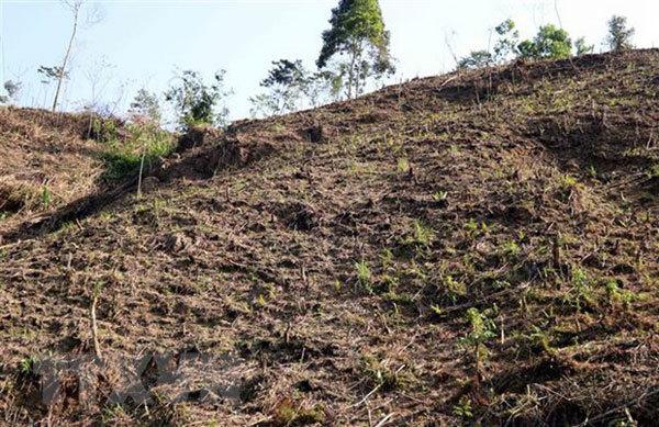 Tuyen Quang faces large deforestation