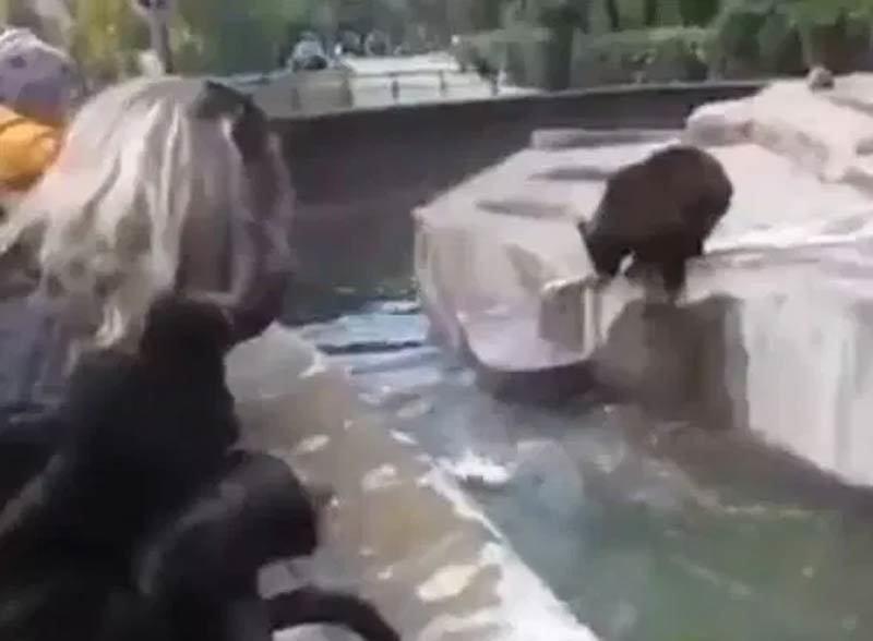 Clip gã say tấn công và định dìm chết gấu ở vườn thú Ba Lan