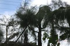 Công an điều tra vụ học sinh lớp 9 chặt cây bị điện giật tử vong