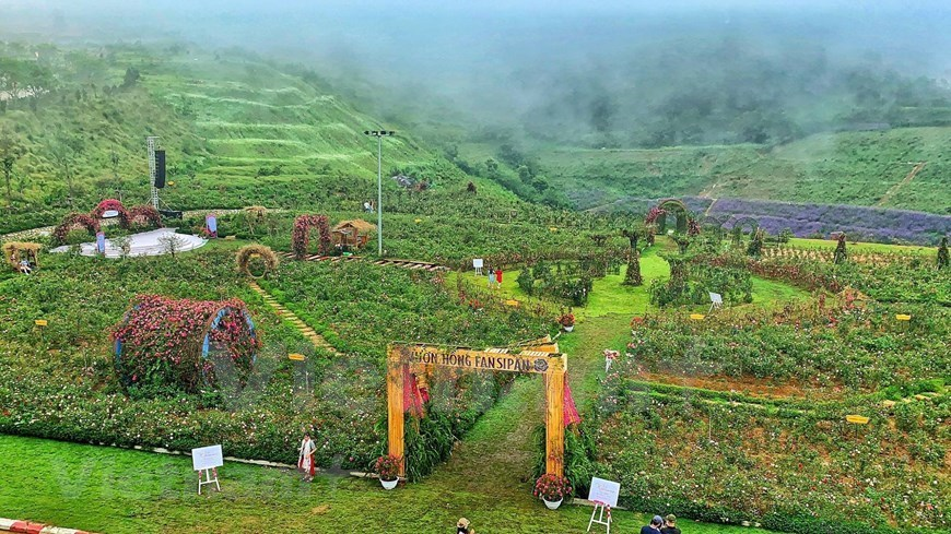 Rose valley in misty Sapa