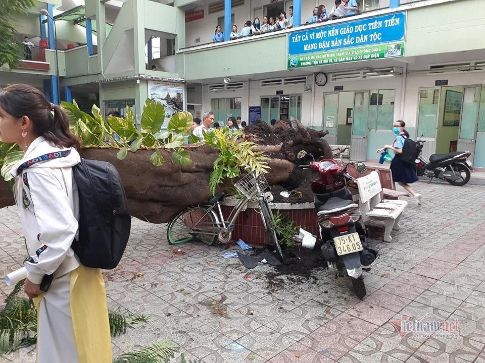 Hiệu trưởng nhận trách nhiệm vì cây đổ đè học sinh