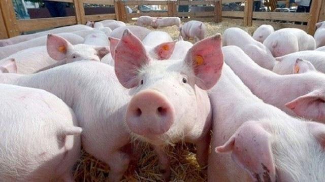 Giá thịt lợn bị 'thổi' lên gần 300.000 đồng/kg, người dân 'sợ', tiểu thương 'khóc ròng'