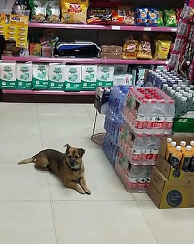 Chú chó chờ ở bệnh viện suốt 3 tháng vì không biết chủ mất vì Covid-19