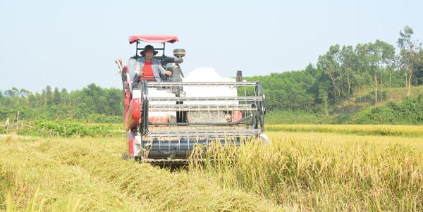 Nông dân rậm rịch đổi máy gặt chuẩn bị cho vụ mùa đông - xuân