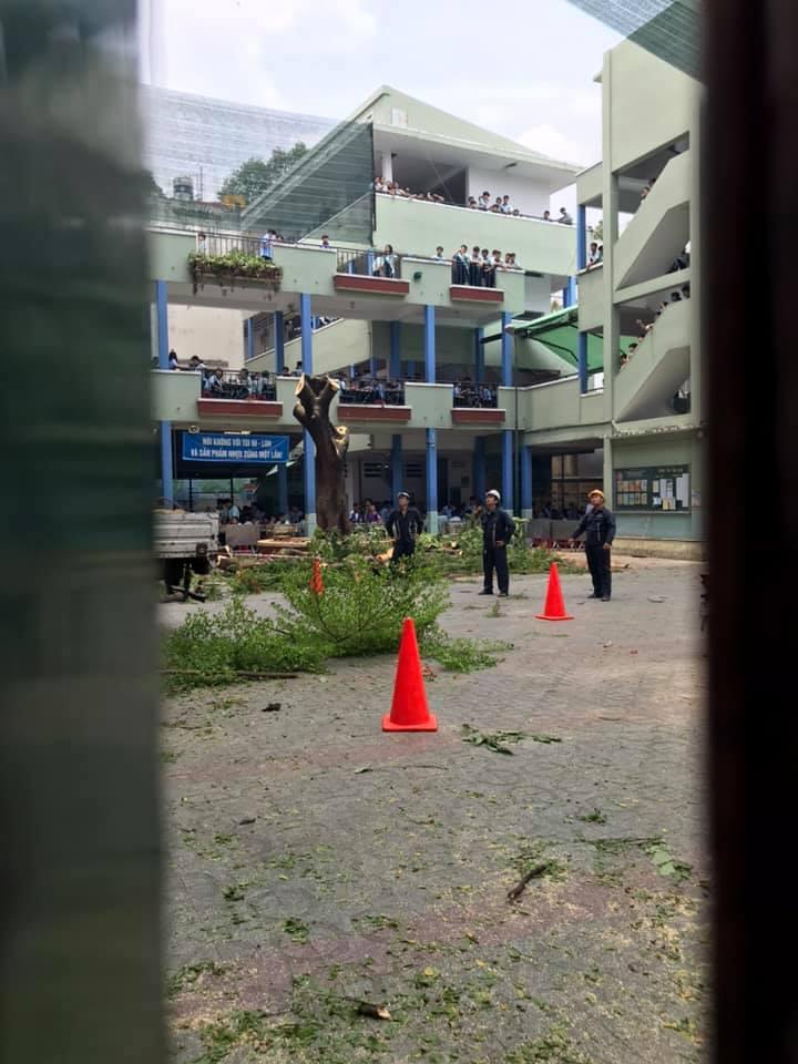 Trường Bạch Đằng cắt hết cây sau sự cố phượng đổ đè 18 học sinh