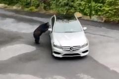 """Đỗ ven đường,  ô tô Mercedes bị gấu đen """"hỏi thăm"""""""