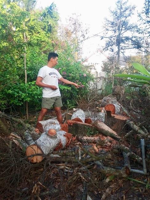 Vườn cây cả tỷ đồng bỗng chốc biến thành đống củi khô, nông dân xót xa