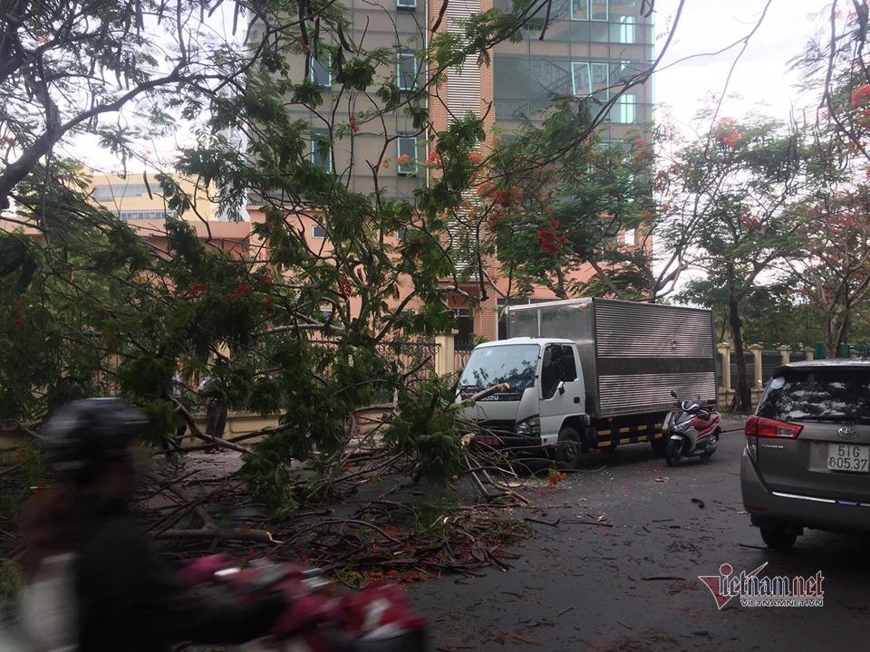 Lại một cây phượng bật gốc đè trúng xe tải ở Sài Gòn