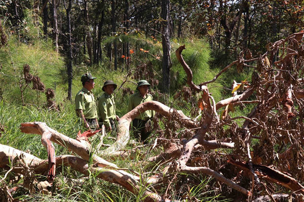 Deforestation continues to ragein Vietnam
