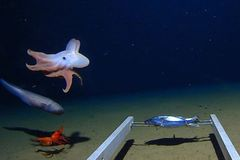 World's deepest octopus captured on camera