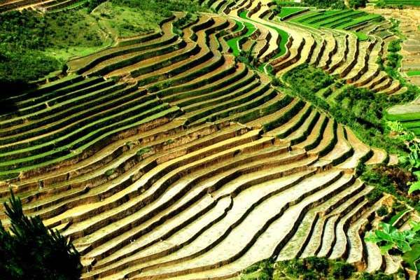 Tourism programme to highlight delights ofMu Cang Chai District