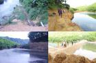 Sau phạt 150 triệu, trang trại lợn xả hôi thối ở Nghệ An tiếp tục bị xử lí