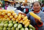 Xe bắp luộc bán gần 1.000 trái mỗi ngày được nhiều Việt kiều biết đến
