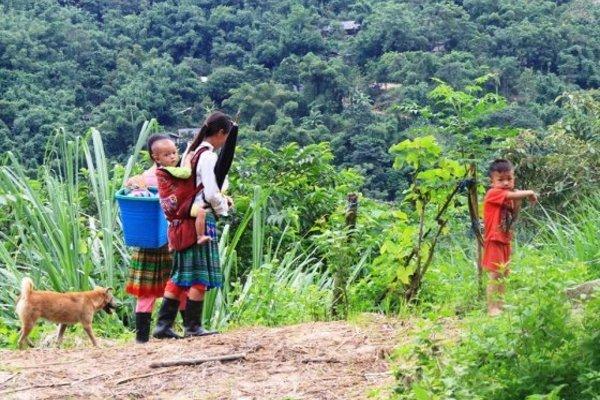 Xã Sơn Thủy đẩy mạnh quy hoạch vùng trồng cây dược liệu