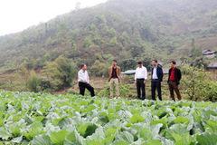 Vùng cao Bát Xát trồng rau ôn đới, thoát nghèo bền vững