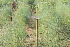 Ứng dụng khoa học, kỹ thuật vào nông nghiệp cho thu nhập cao
