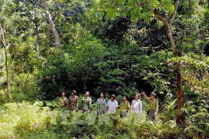 Natural forest closure helps restoration efforts