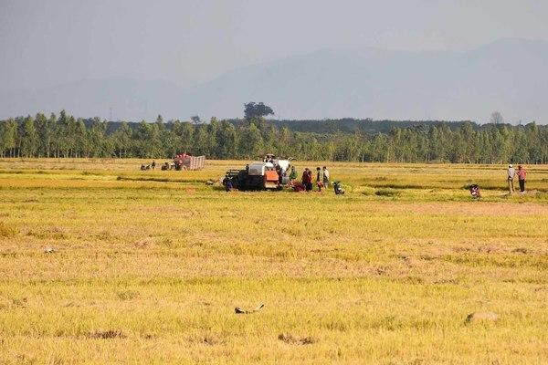 Vào nông hội được chia sẻ kinh nghiệm sản xuất lúa nước