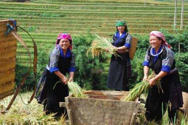 Người Mông ở Mù Cang Chải thoát nghèo nhờ thay đổi tập quán canh tác