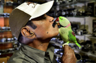 'Người Chim' tự nguyện cho 4000 con vẹt ăn mỗi ngày