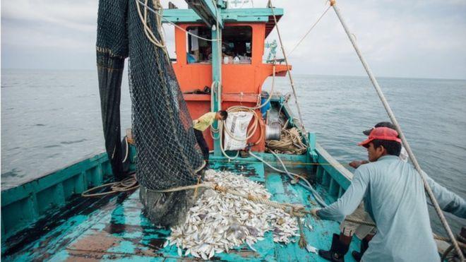 Asia's fishermen and farmers go digital during virus