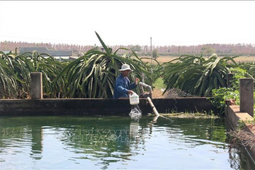 Binh Thuan farmers dig ponds, build small reservoirs to store water