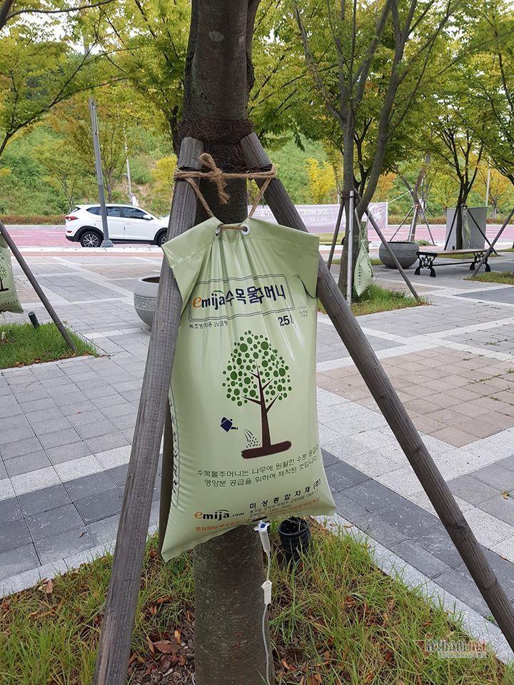 Xem cách bảo vệ và chăm cây ở Hàn Quốc