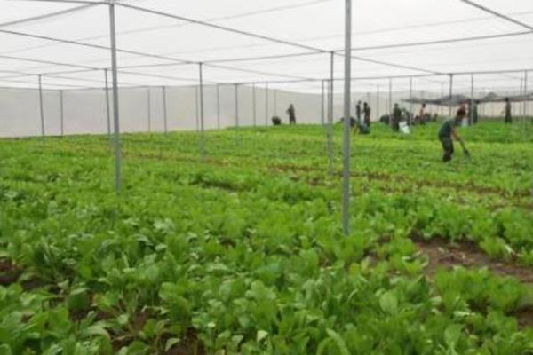 Thị xã Ba Đồn: Mô hình liên kết theo chuỗi giá trị giúp tăng thu nhập