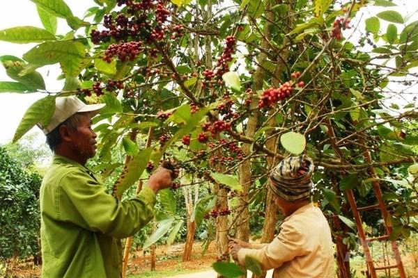 Việt Nam-Liên bang Nga: Tận dụng tốt nhất ưu đãi của AEAU, thúc đẩy thương mại nông sản