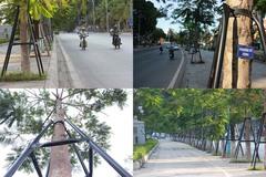 Hàng trăm cây phượng trên tuyến đường du lịch Hạ Long được gia cố thay vì chặt hạ