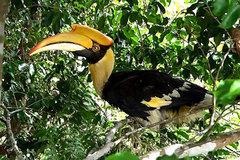 Vietnam has wildlife legal framework, needs better enforcement: environment official